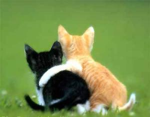 cat_fun_joke_humor_lucu_051